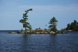 Wind-swept_tree_in_Lake_Nipissing